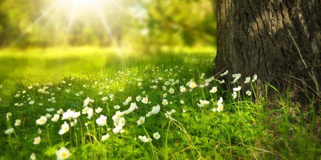 benefici della primavera