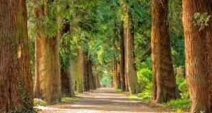 natura un rimedio gratuito allo stress