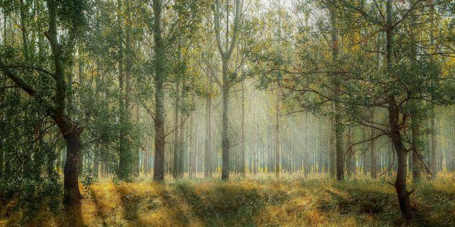 curarsi con la natura in norvegia