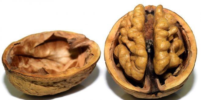 alimenti che nutrono il cervello