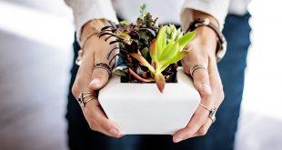 benefici piante grasse